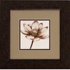 Propac Images Sepia Lotus 2 Piece Framed Graphic Art Set