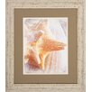 Propac Images Conch 2 Piece Framed Graphic Art Set