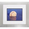 Propac Images Shell 2 Piece Framed Photographic Print Set