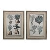 <strong>Oversized Coral Species 2 Piece Framed Graphic Art Set</strong> by Sterling Industries