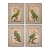 Sterling Industries Parrot And Palm 4 Piece Framed Graphic Art Set