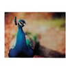 Sterling Industries Peacock Photographic Print on Canvas