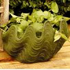 <strong>OrlandiStatuary</strong> Nori Shell Planter