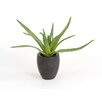 Distinctive Designs Silk Greenery Aloe Desk Top Plant in Pot (Set of 2)