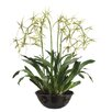 "<strong>Allstate Floral</strong> 32"" Brassia Orchid Plant with Terra Cotta Bowl"