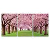 Antique Revival Blooming Cherry Blossoms 3 Piece Photographic Print Set