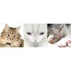 Euro Cats Panoramic Wall Decal