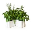 <strong>X-Tray Flower Pot</strong> by VItamin