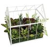 A&B Home Group, Inc Succulent in Greenhouse