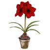 <strong>Winward Designs</strong> Amaryllis in Pot