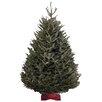Fraser Fir Direct Fresh North Carolina 7.5-8' Fraser Fir Christmas Tree