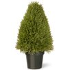 <strong>Juniper Upright Desk Top Plant in Pot</strong> by National Tree Co.