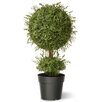 National Tree Co. Tea Leaf Mini 1-Ball Topiary with Growers Pot