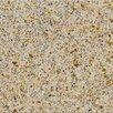 "MS International 12"" x 12"" Polished Granite Tile in Giallo Fantasia"