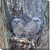 <strong>West of the Wind Outdoor Canvas Art</strong> Owl #1 Photographic Print on Canvas