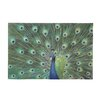 Woodland Imports Peacock Painting Print on Canvas