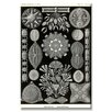 Buyenlarge Diatoms Graphic Art on Canvas