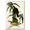 Buyenlarge Connecticut Warbler Graphic Art on Canvas