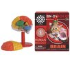 <strong>Tedco Toys</strong> Brain Box Kit