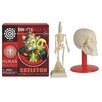 Tedco Toys Skeleton Box Kit