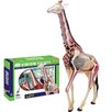 <strong>Tedco Toys</strong> 4D Vision 27 Piece Giraffe Anatomy Model Set