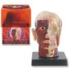 <strong>Bio Signs 6 Piece Brain and Skull Set</strong> by Tedco Toys
