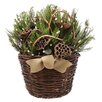 <strong>Holiday Lotus and Willow Hanging Plant in Basket</strong> by Urban Florals