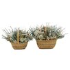 Urban Florals Summer St. Martin Desk Top Plant in Basket 2 Piece Set