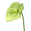 <strong>DIY Flower Artificial Anthurium Spray (Set of 12)</strong> by Distinctive Designs