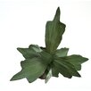 Distinctive Designs DIY Foliage Natural Staghorn Fern Floor Plant with 15 Leaves (Set of 6)