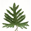 Distinctive Designs DIY Foliage Medium Philodendron Selloum Leaf (Set of 12)