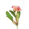 Distinctive Designs DIY Flower Sonia Cattleya Head (Set of 12)