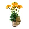 Creative Displays, Inc. Ranunculus in French Glass