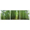 Artistic Bliss Bamboo Path 3 Piece Photographic Print Set