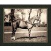 Melissa Van Hise Horse lV Framed Photographic Print