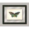Melissa Van Hise Butterfly V Framed Graphic Art