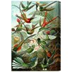 Oliver Gal Haeckel - Bird Study Painting Print on Wrapped Canvas