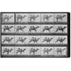 Oliver Gal Camels in Motion Photographic Print on Canvas