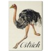 "Oliver Gal ""Ostrich"" by Olivia's Easel Canvas Art"