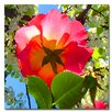 """Trademark Fine Art """"Rose Under Tree"""" by Amy Vangsgard Painting Print on Canvas"""