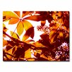 "Trademark Fine Art ""Light Coming Through Tree Leaves"" by Amy Vangsgard Photographic Print on Canvas"