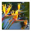 """<strong>Trademark Fine Art</strong> """"Bird of Paradise Backlit by Sun"""" by Amy Vangsgard Painting Print on Canvas"""