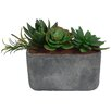 Laura Ashley Home Succulents Desk Top Plant in Planter