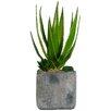 Laura Ashley Home Succulents Desk Top Plant in Pot