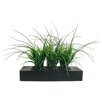 Laura Ashley Home Grass in Rectangular Planter