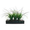 <strong>Laura Ashley Home</strong> Grass in Rectangular Planter