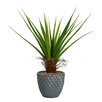 <strong>Laura Ashley Home</strong> Tall Agave Floor Plant in Fiberstone Pot