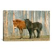 iCanvas Brown and Black Pony by Carl Rosen Photographic Print on Canvas