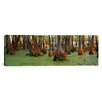 iCanvas Panoramic Bald Cypress Trees in a Forest, Illinois Photographic Print on Canvas