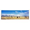 iCanvas Panoramic Bison Herd, Grand Teton National Park, Wyoming Photographic Print on Canvas